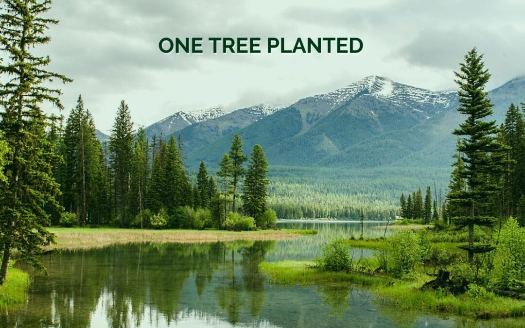 One Tree Planted – Effective Altruism